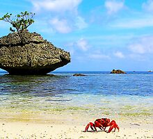Red Crab On Beach At Flying Fish Cove by Kee Seng FOO