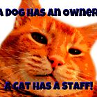 A Cat Has A Staff by Vince Scaglione
