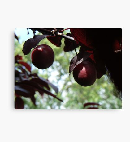 fruit in tree Canvas Print