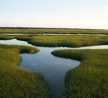 Tidal Marsh by amygriff