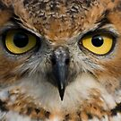 Owl Eyes by printsbypixie