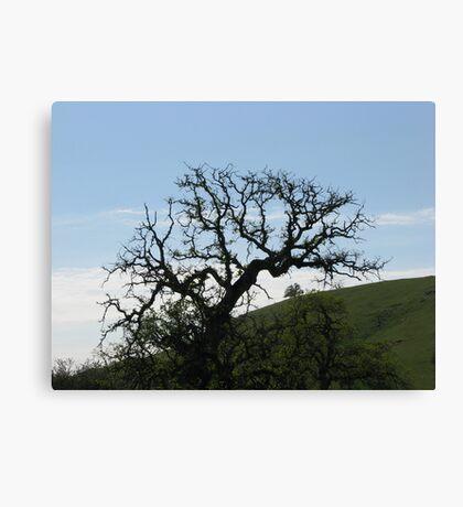 Blue Oak I Canvas Print