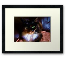 Mirror Mirror on the Wall Who`s the bestestest cat of all Framed Print