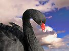 Black Swan by Carol Bleasdale