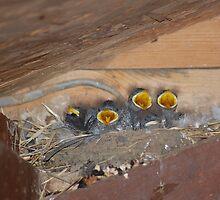 One swallow doesn't make a summer by Robert Redman