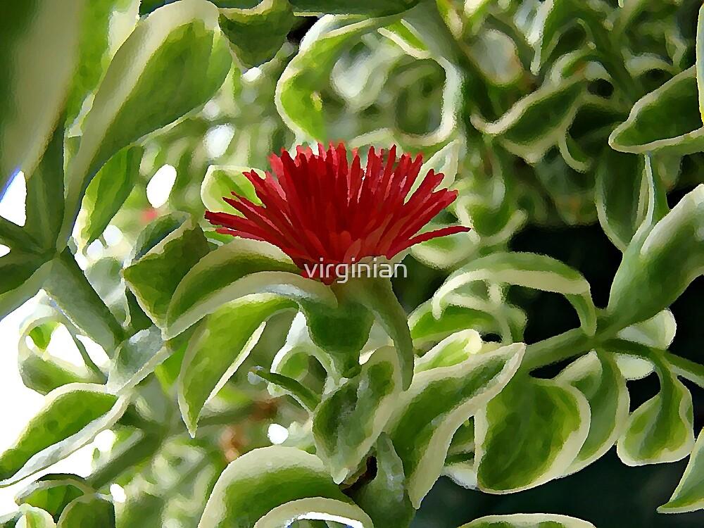 Little Red Flower by virginian
