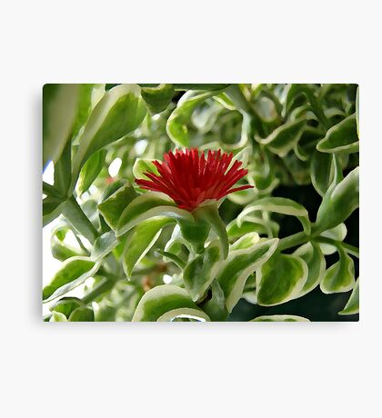 Little Red Flower Canvas Print