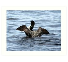Loon 2 - Lake Muskoka Art Print