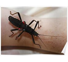 Black Beauty Stick Insect Poster