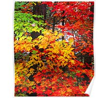 AUTUMN MAPLES,FOOTHILLS PARKWAY Poster