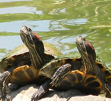 Smiling Turtles by Navigator