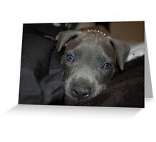 New blue eyes Greeting Card