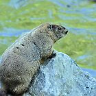 Groundhog Along The River by Jeff Ore