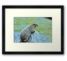 Groundhog Along The River Framed Print