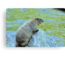 Groundhog Along The River Canvas Print