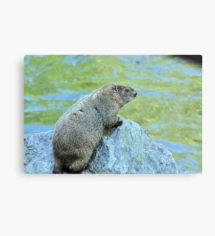 Groundhog Along The River Metal Print