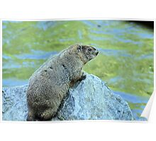 Groundhog Along The River Poster