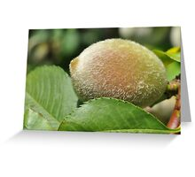 Baby Peach Greeting Card