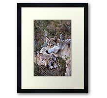 Wolf Picture ~ Family Ties Framed Print