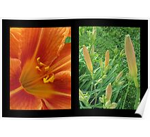 Lily Diptych Poster