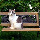 Fantastic Feral Felines by PatChristensen