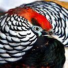 Amhearst pheasant by Natalia1380
