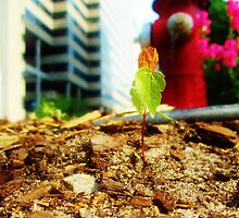 Lonely Plant in the Street by Corinne Buescher