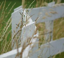Curving White Fence by Adele Haberland
