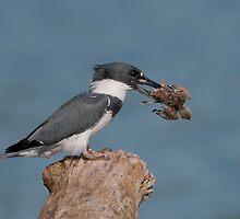 Cleaning the nest by (Tallow) Dave  Van de Laar
