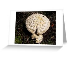Smelly Fungi Greeting Card