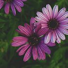 purple floral by lisjen
