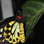 butterfly effect by lisjen