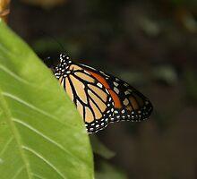 butterfly effect two by lisjen