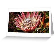 King Protea, Kirstenbosch  Gardens, South Africa  Greeting Card