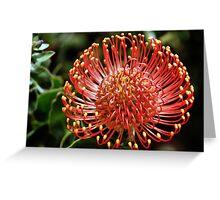 Protea portrait, Kirstenbosch Gardens, South Africa  Greeting Card