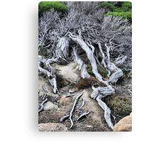 Survival in Western Australia Canvas Print