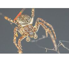 Furry Spider Photographic Print