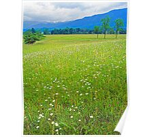 MEADOW,CADES COVE Poster