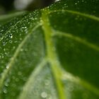 Rainy Leaf by stay-focussed