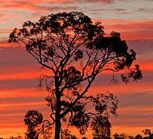 Country Twilight - Chinchilla Qld by Beth  Wode