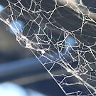 charlottes web by lisjen