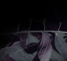 Untitled by lisjen