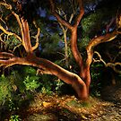 Red Gums Lightpainted by Michael Lynch