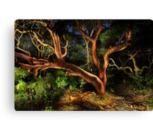 Red Gums Lightpainted Canvas Print