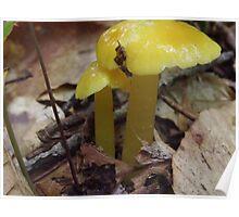 Yellow Fellows Poster