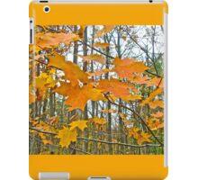 Maple Tree Autumn Foliage iPad Case/Skin