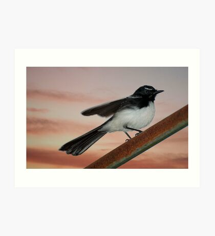 Willy Wagtail 2 Art Print