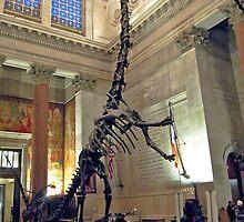 Ancient Zigongosaurus by skeletonsrus