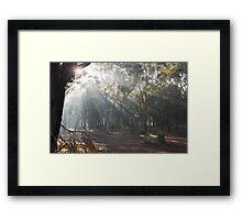 Foggy Forrest Framed Print