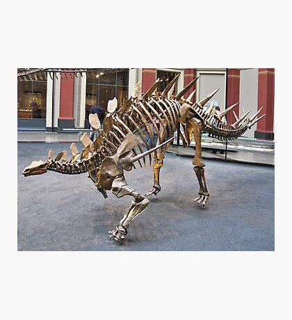 Cool Zigongosaurus Photographic Print